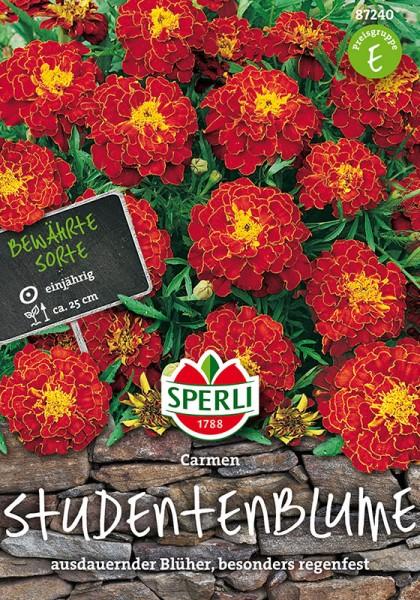 Studentenblumen Carmen