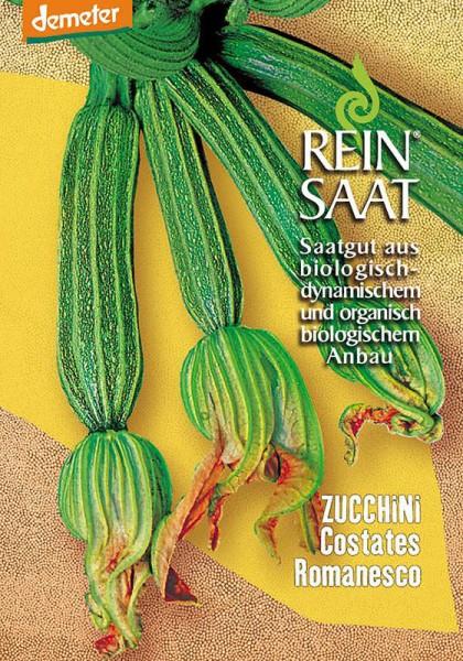 Zucchini Costates Romanesco