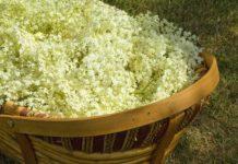 Korb mit Holunderblüten