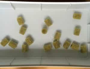 IKEA Hydrokultur - Keimblöcke beim Quellen