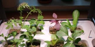 IKEA VÄXER Hydrokultur mit Pflanzen (Übersicht)