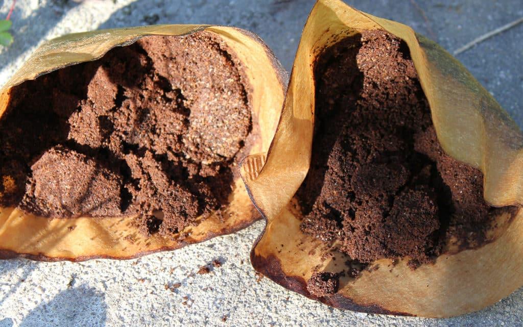 kaffeesatz als g nstigen bio d nger verwenden