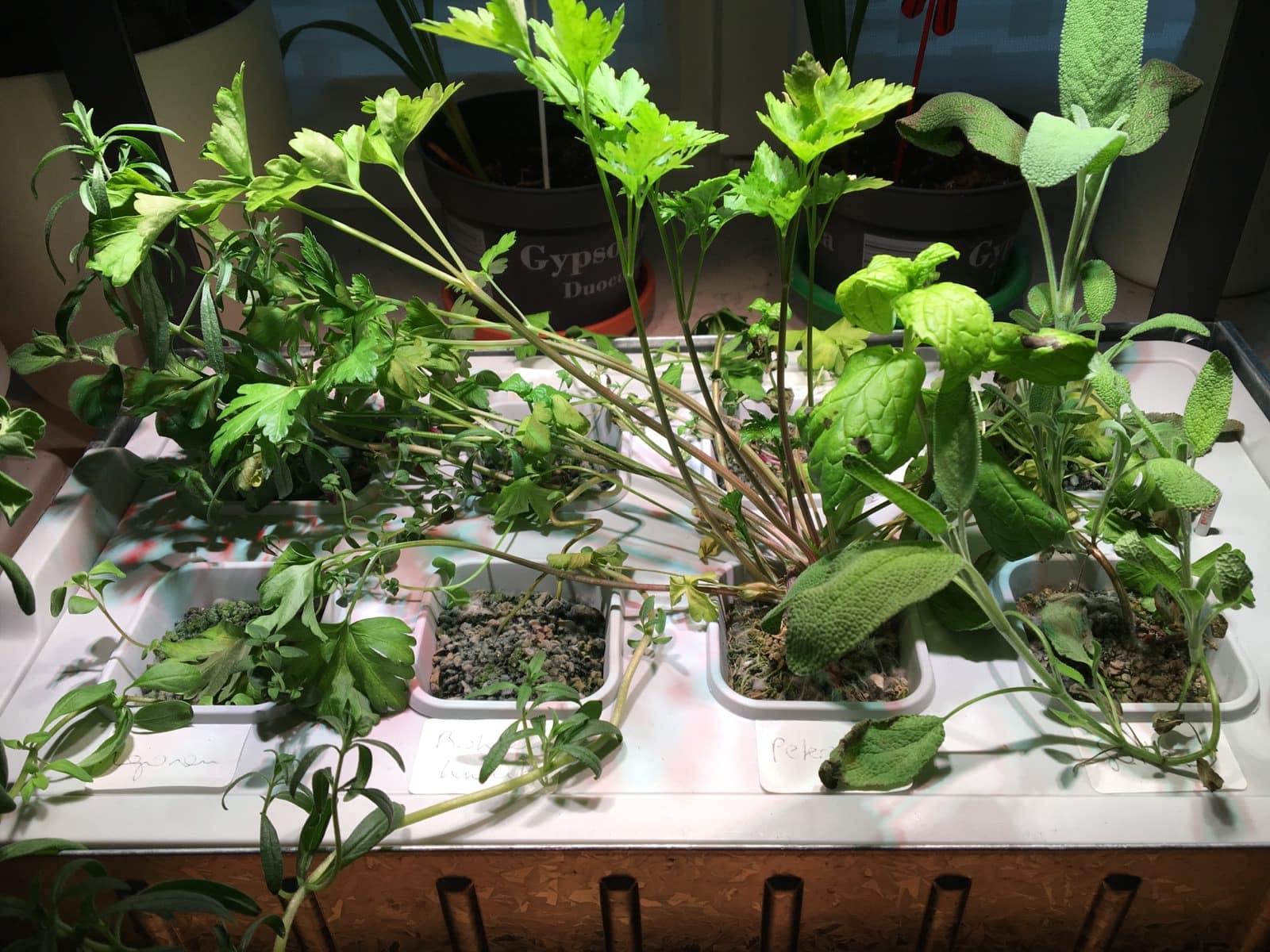 Ikea v xer hydrokultursystem remixed kr uter teil 2 for Ikea kunstliche pflanzen