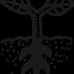 Icon Freiland