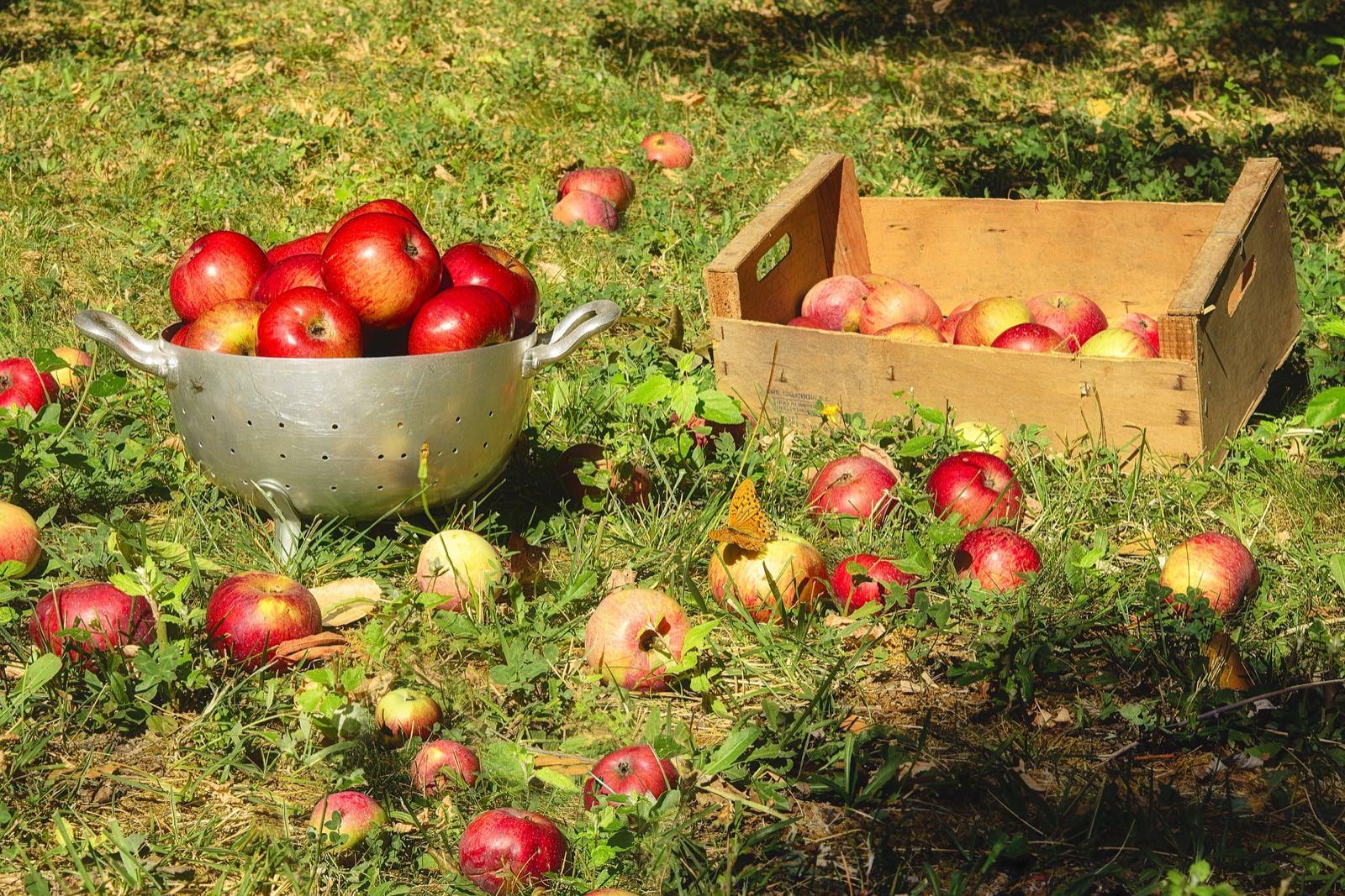 Garten Im September das gibt s im september im garten zu tun beetfreunde de