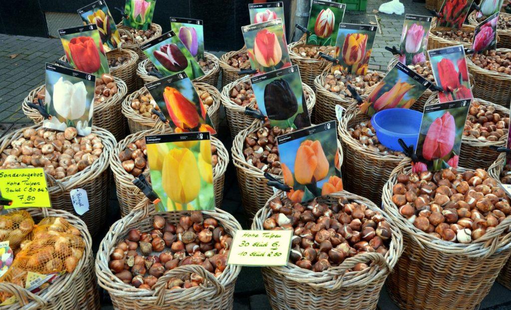 Blumenzwiebeln am Markt