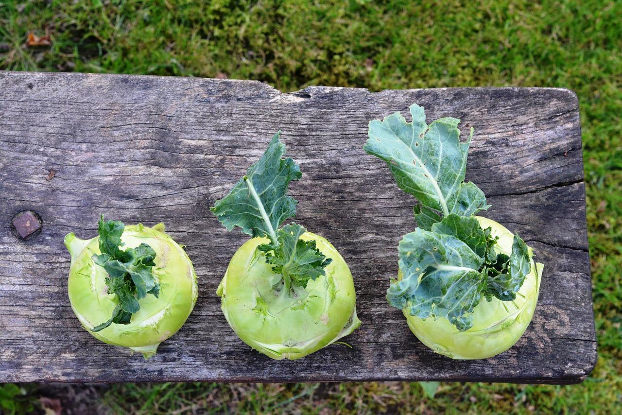Fabelhaft Kohlrabi: Tipps zu Anbau, Pflege und Ernte - beetfreunde.de &GG_36