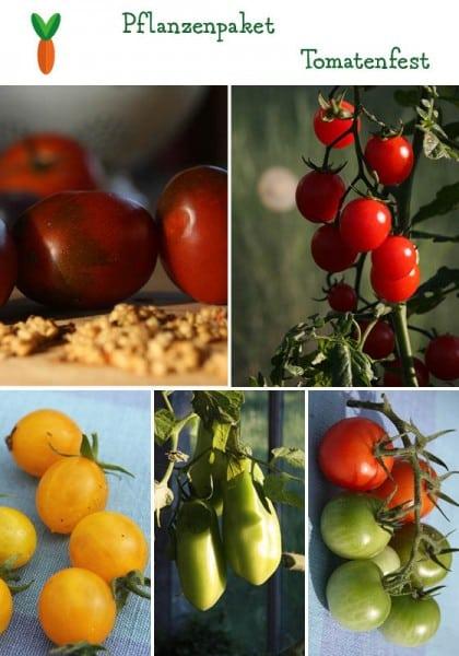 Tomatenfest – 6 Pflanzen
