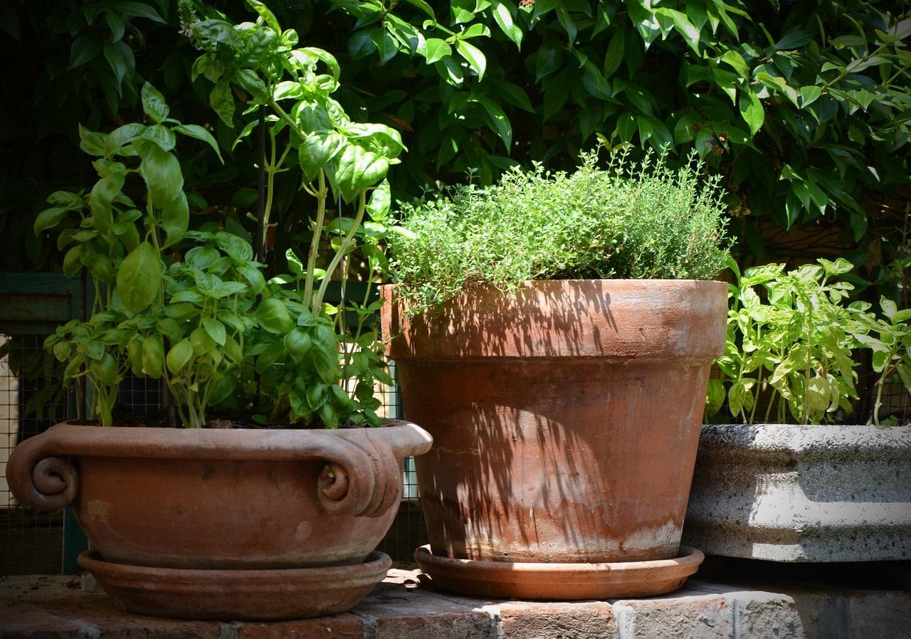 Mediterrane Krauter Im Garten Anbauen Pflegen Und Ernten