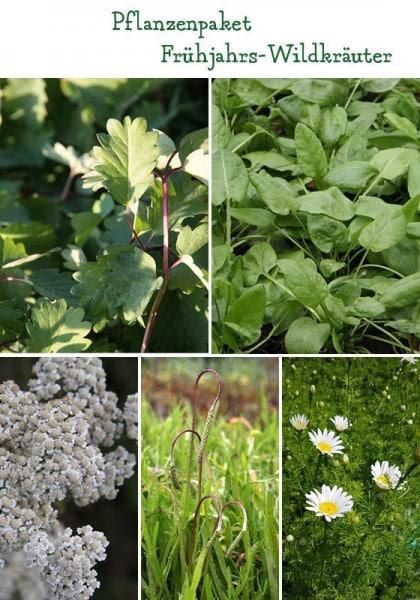 Frühlingshafte Wildkräuter – 6 Pflanzen