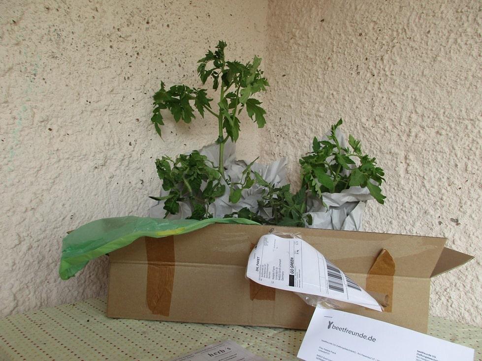 Tomatenpaket