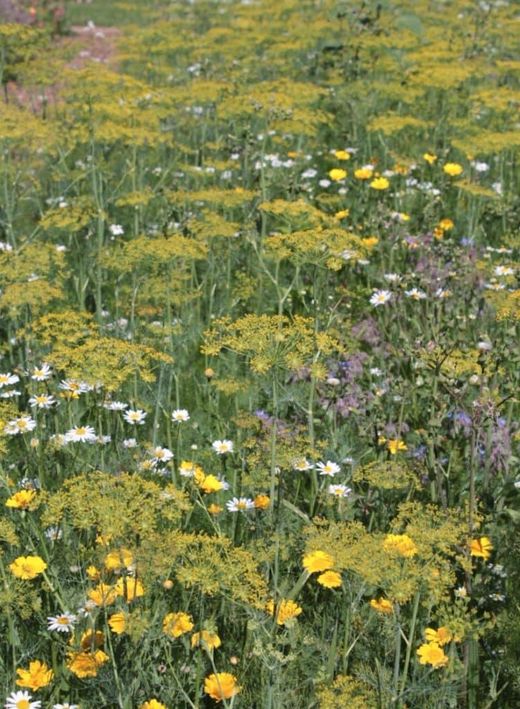 Bienenweide anlegen