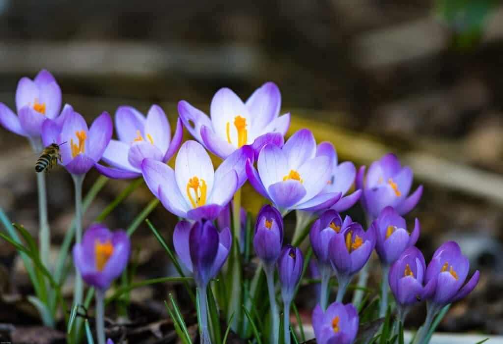 Gartenblumen