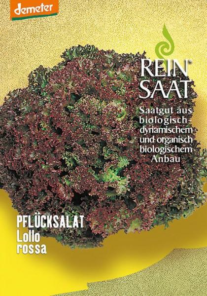 Pflücksalat Lollo Rossa